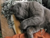 fs-fugz-catnip-nap