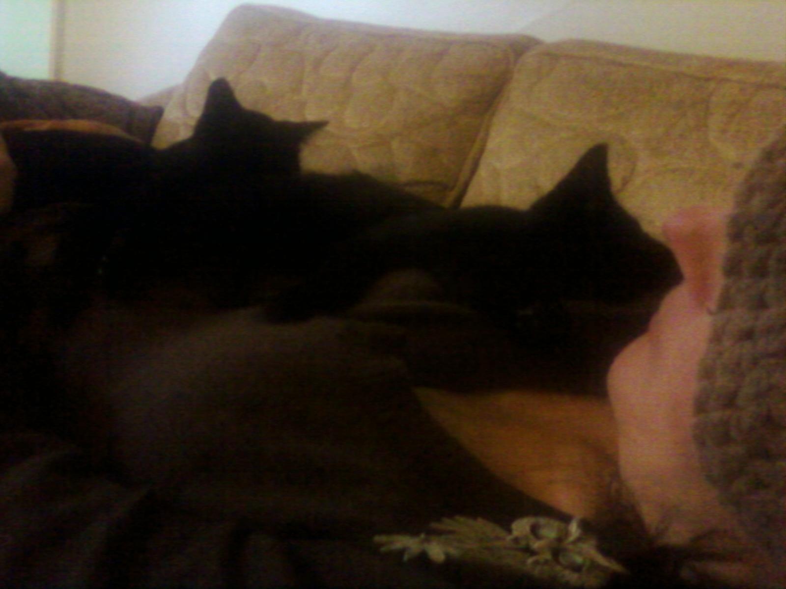 kittens-0105121533