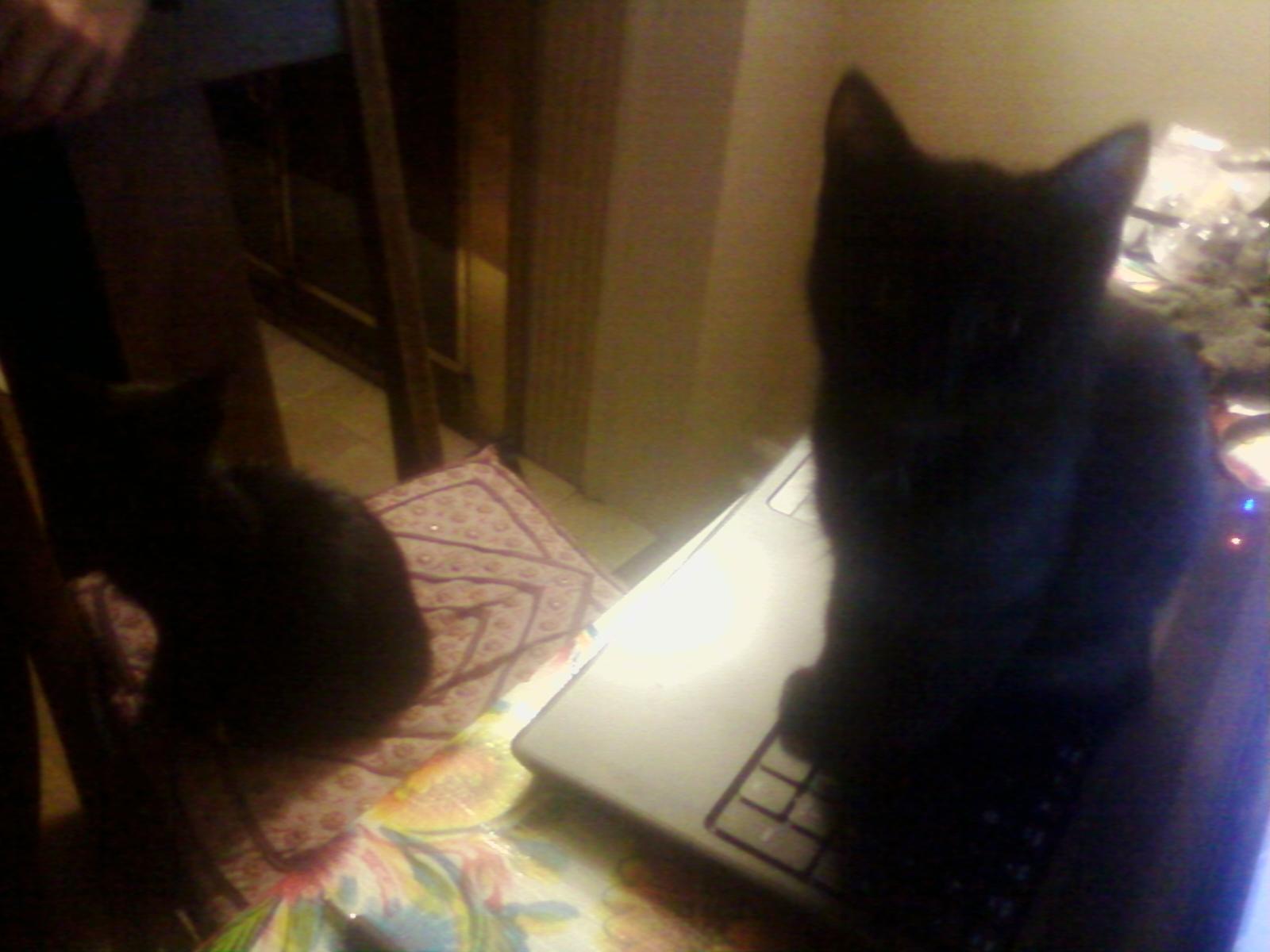 kittens-0106122113
