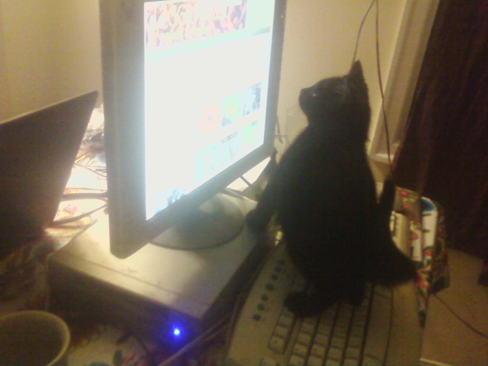 kittens-0107121954