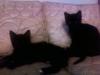 kittens-0105121610