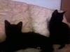 kittens-0105121611