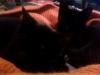kittens-0107121044