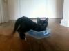 kittens-0107121216a