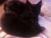 kittens-0107121333