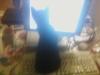 kittens-0107121955