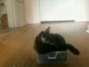 kittens-downsize