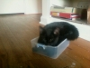kittens-downsize_2