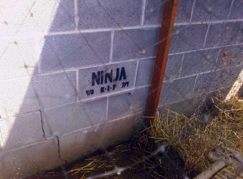 The grave of a different Ninja