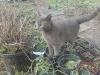 Fugz, standing in catnip starts