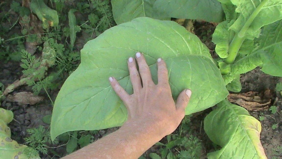 tbgallery-hand-on-leaf