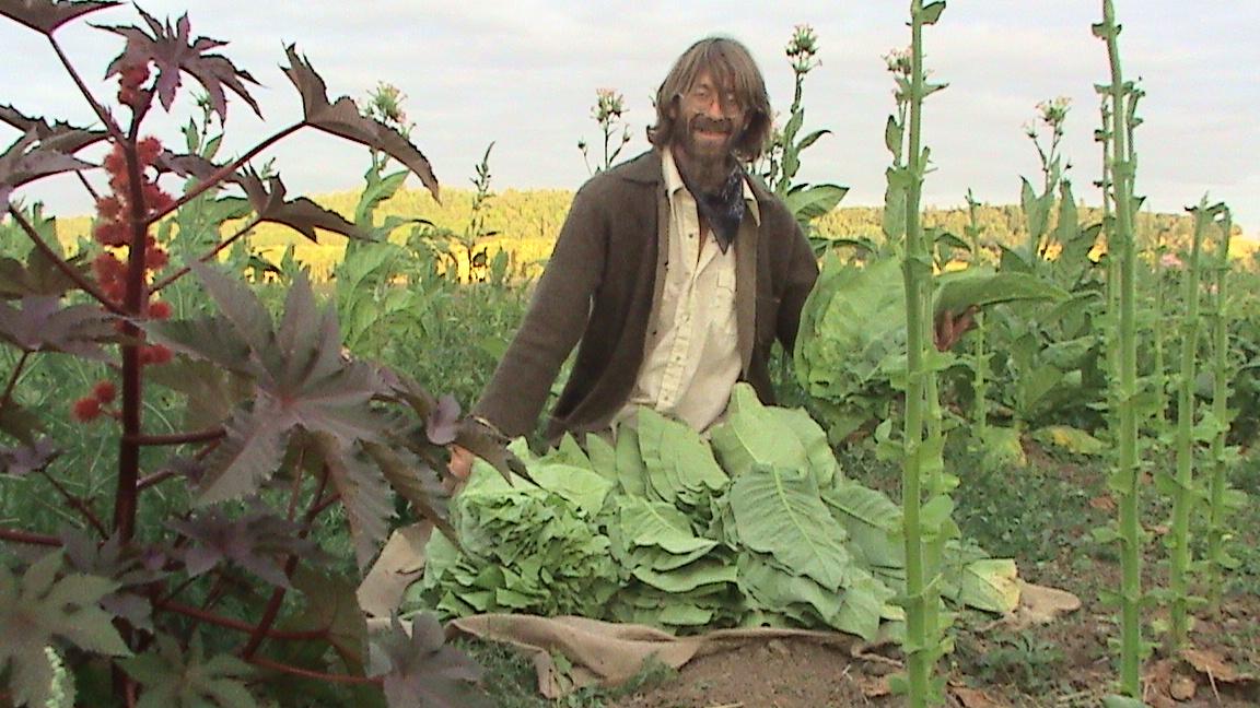 tbgallery-harvest2