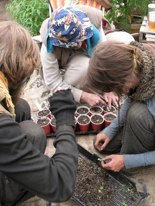 tbgallery-transplanting-seedlings