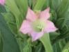 tbgallery-flowers5