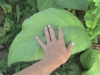 tbgallery-hand-on-leaf
