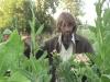 tbgallery-harvest3
