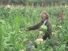 tbgallery-harvest4