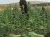 tbgallery-harvest5