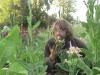 tbgallery-harvest6
